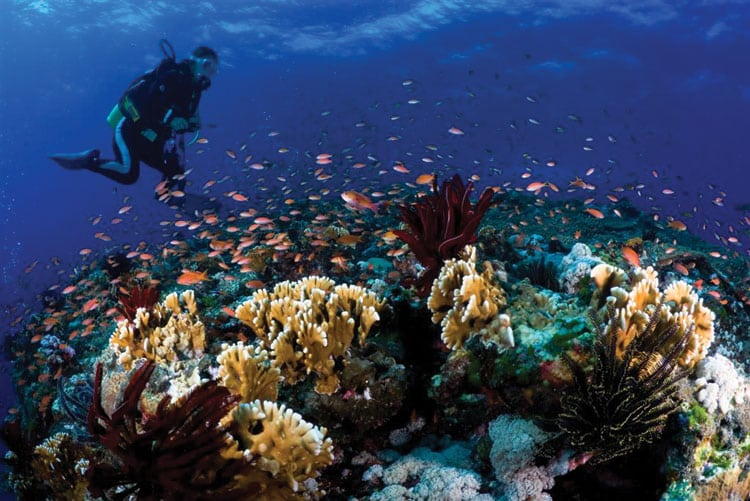 Explore Okinawa's Sea Life