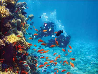 Scuba Diver surrounded by red fish