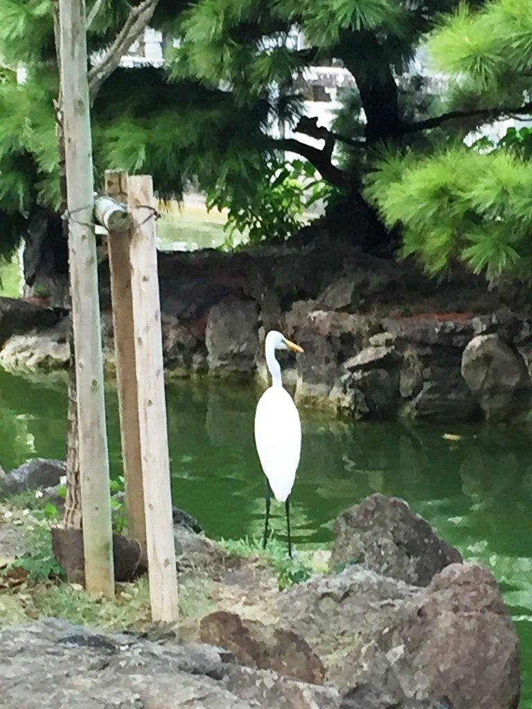 Crane overlooking Koi pond at Fukushen Gardens