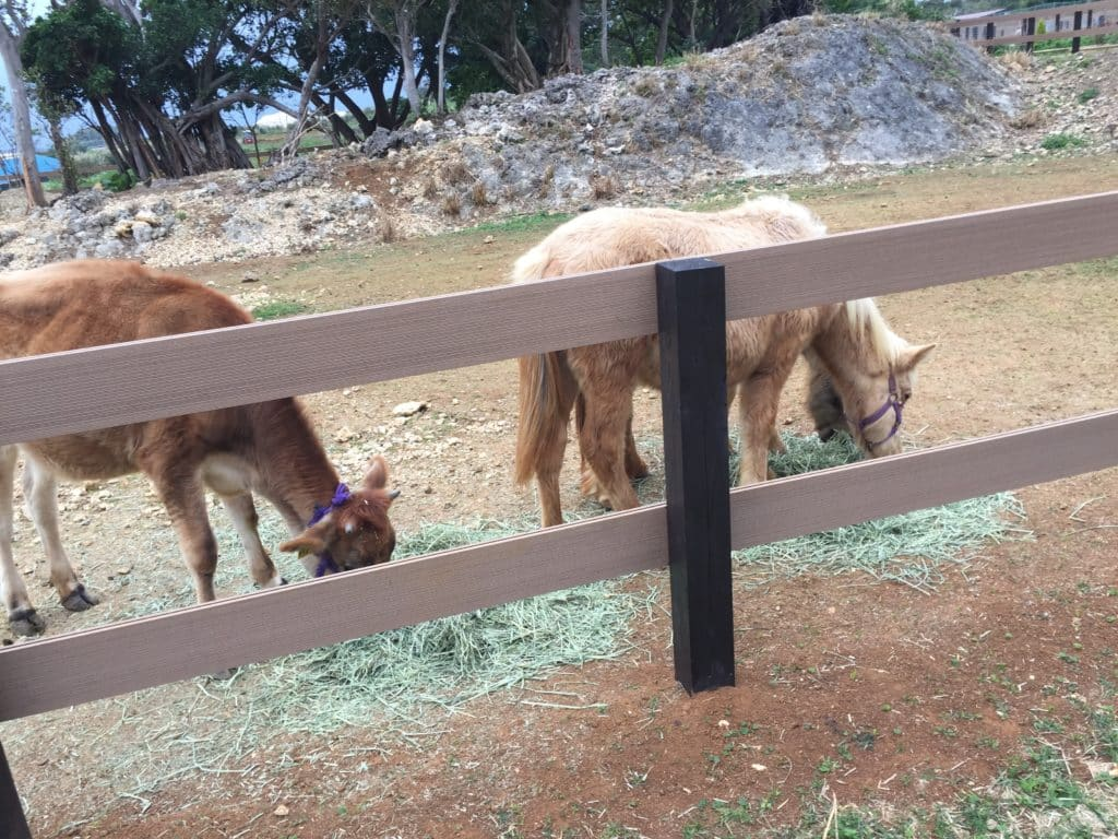 Ponies at Itoman Tourist Farm
