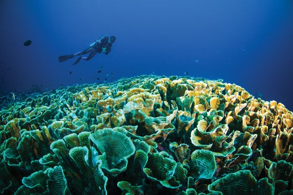 Scuba diver swimming above coral reef