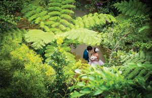 Couple in wedding dress under jungle canopy