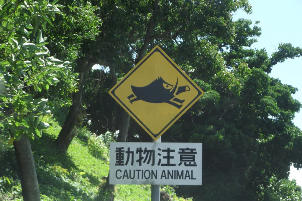 Animal Caution Sign at Cape Hedo