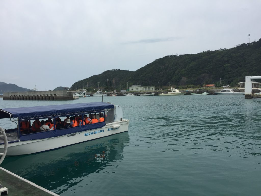 Whale Watching Tours Boat