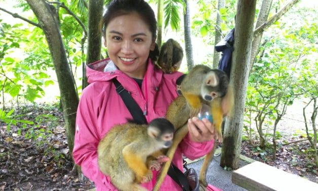 Ishigaki Part 2 – The Attack of the Squirrel Monkeys